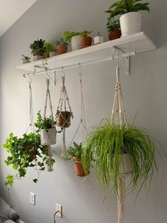 How to hang a plant from ceilings 2