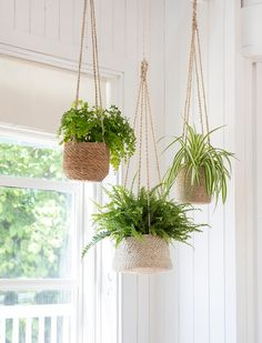 How to hang a plant from ceilings 3