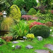Plant Goes in a Japanese Garden