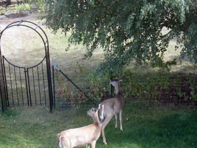 Smart Ways to Garden When You Have Deer