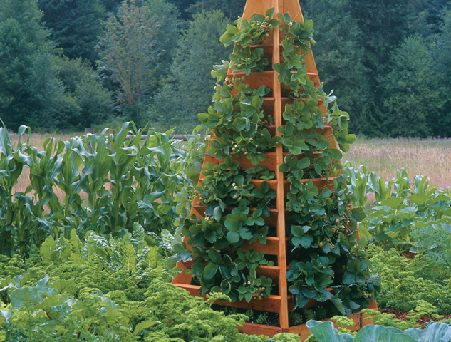 Tall Wooden Strawberry Tower