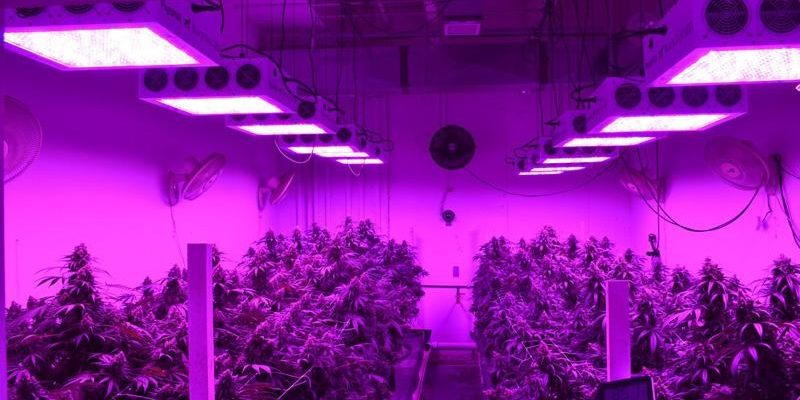 What Color Light Do Plants Grow Best in