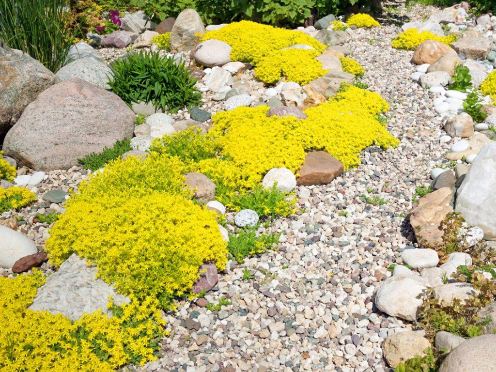 Alpine Hillside Garden