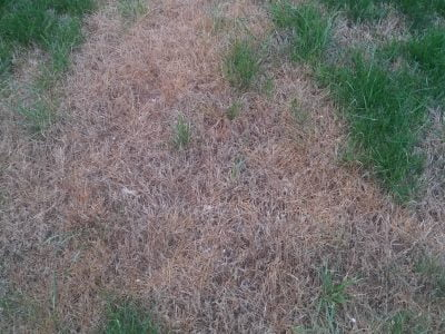 Dead Grass Tips to Regrow, Treat or Prevent
