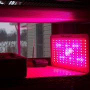 Led Grow Lights Are They Effective for Hydroponics