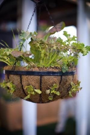 Lettuce Hanging Basket