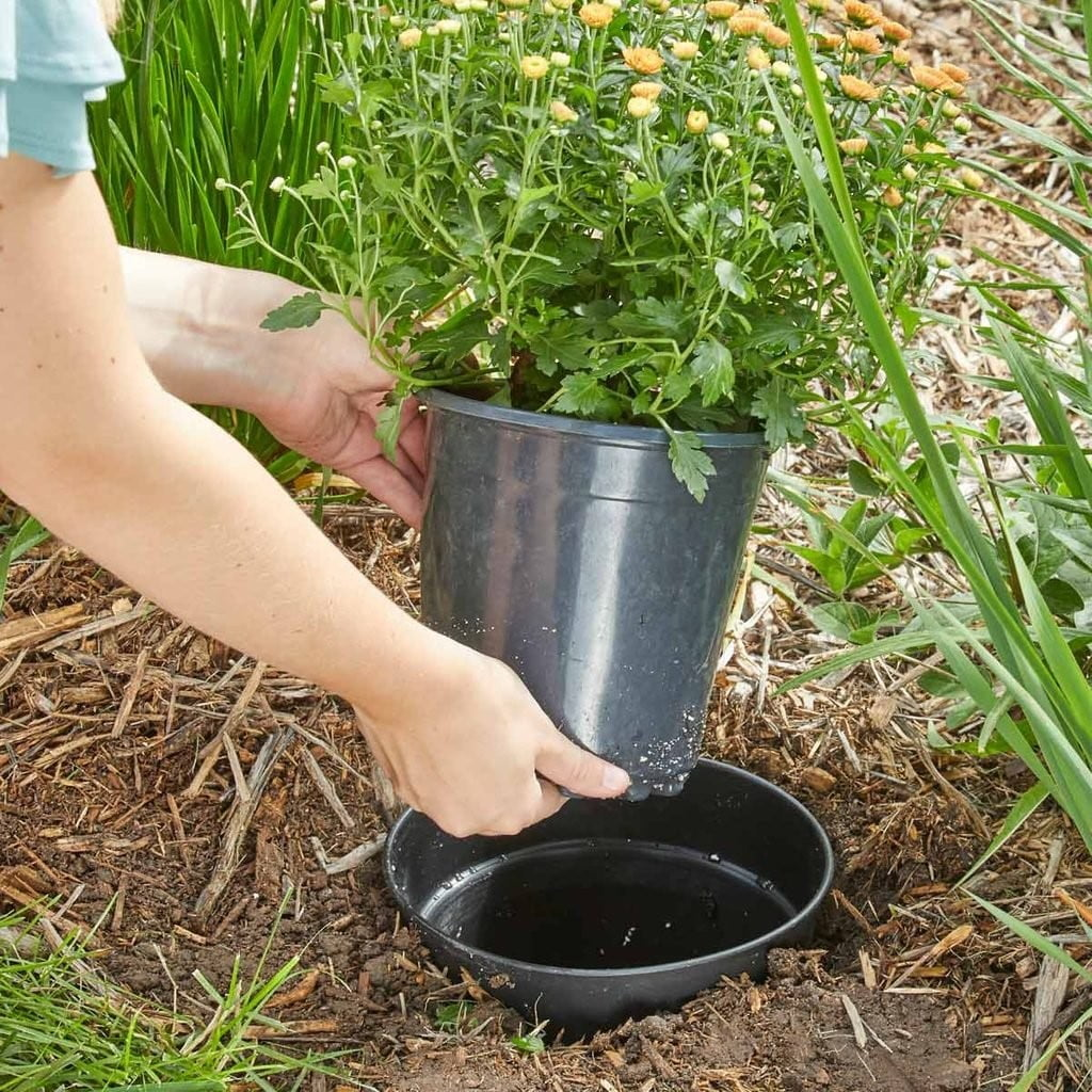 Plant In a Pot Landscaping Design
