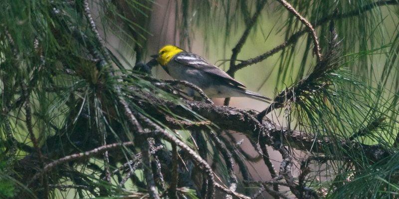 Rare Birds How to Catch Them