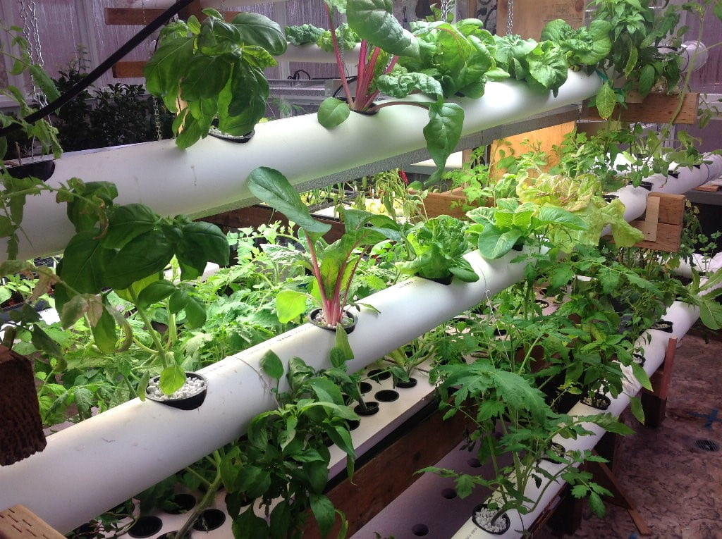 Why Are They Good for Hydroponics