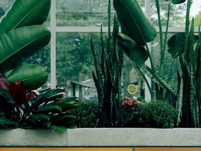 Will a Mirror Affect How Plants Grow