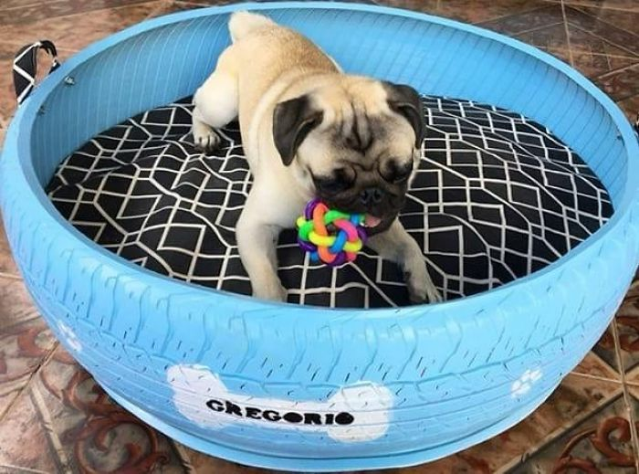 Bed for Your Pet