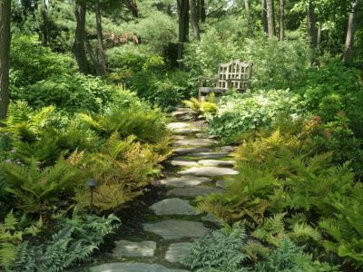 Expensive Plants for Your Woodland Garden