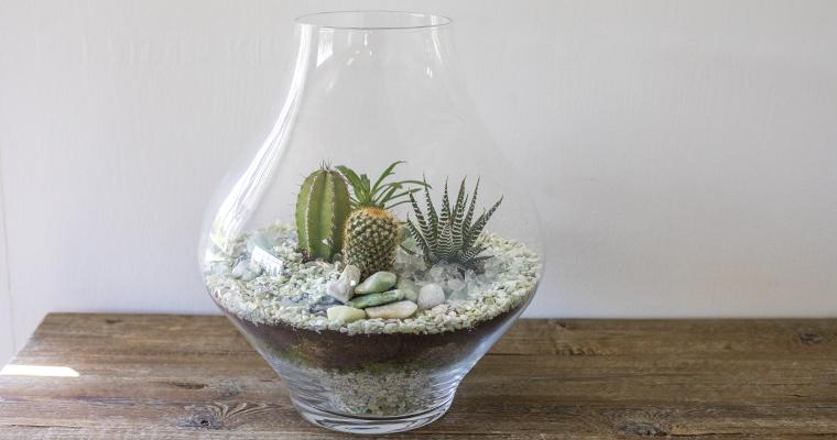 How to Prepare a Cactus Terrarium
