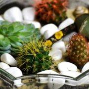 Make a Cactus Terrarium