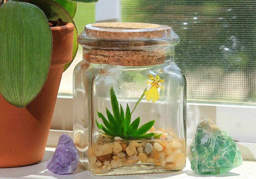 Miniature orchids for small terrariums