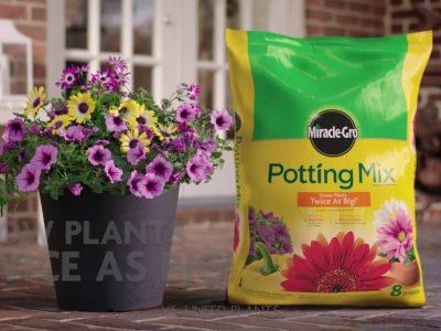 Miracle Grow Potting Soil