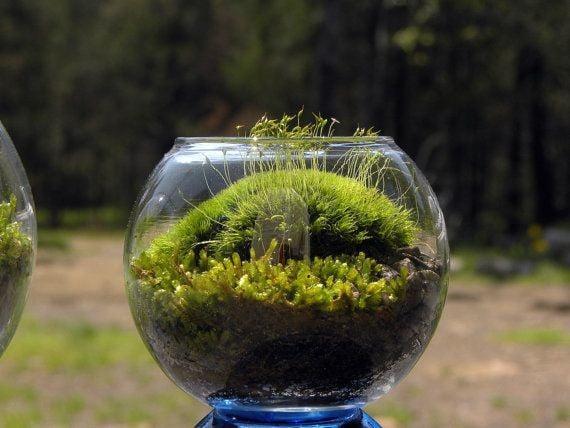 Mood moss for miniature terrariums