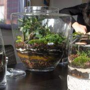 Plant Choices for Smaller Terrariums