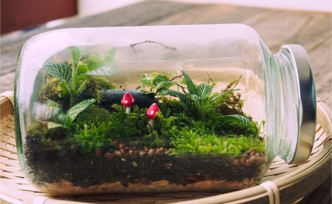 Plants That Can Thrive in a Small Closed Terrarium
