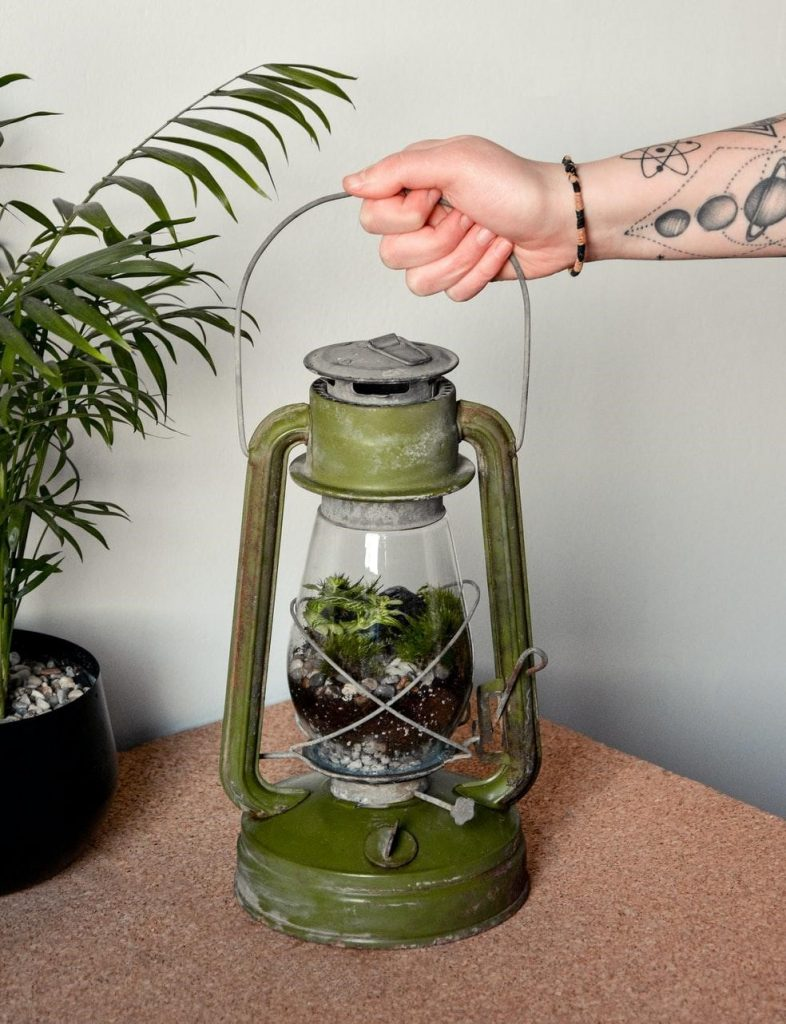 Plants That Do Well in a Small Closed Terrarium