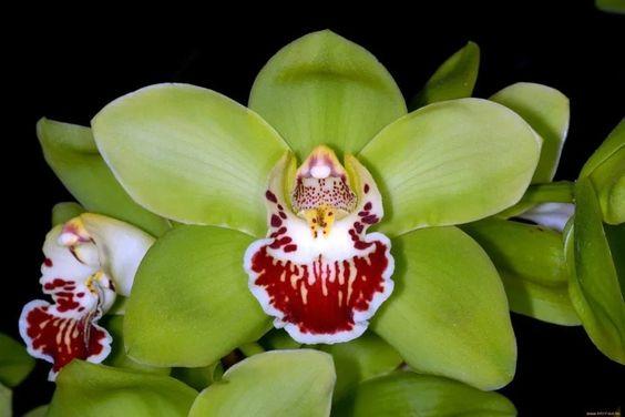 Shenzhen Nongke Orchid