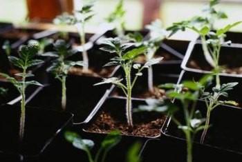 T8 Bulbs for Vegetables