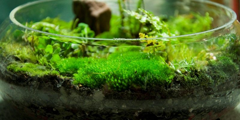 The Best Micro Ferns and Mosses for a Small Terrarium
