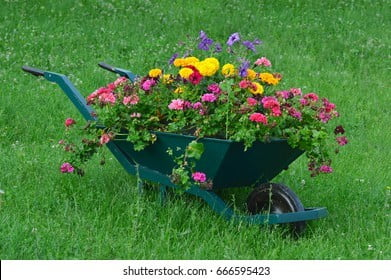 Utilized to Grow Plants & Flowers