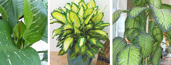 What Are the Best Soils for Indoor House Plants
