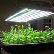 What Is a Grow Light and How to Use It