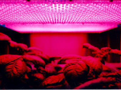 What Plants Grow in Fluorescent Light