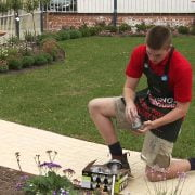 how to place solar lights in garden